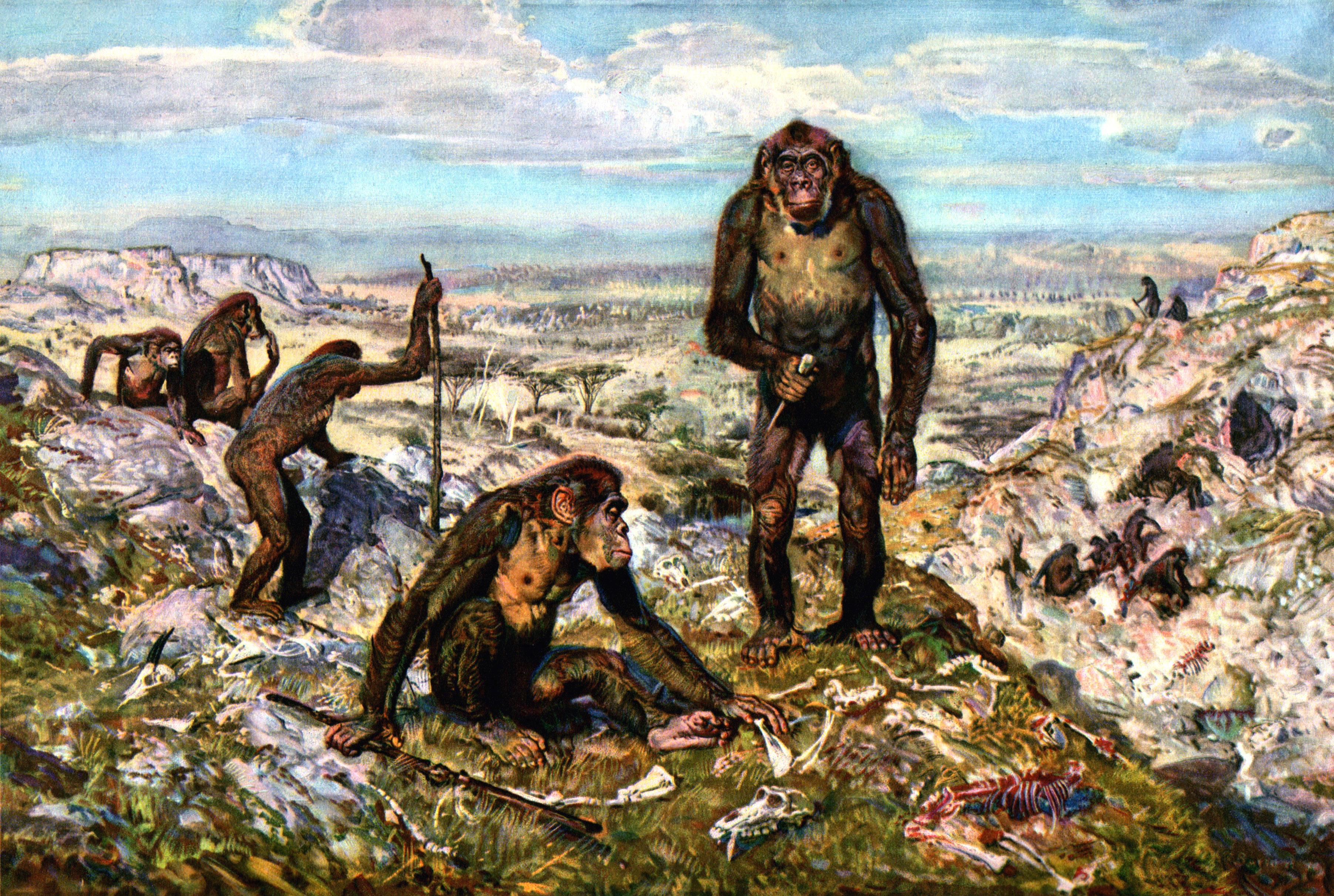 lower paleolithic